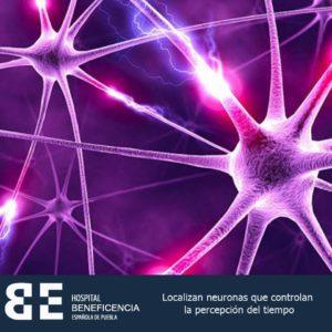 Localizan neuronas que controlan percepción del tiempo